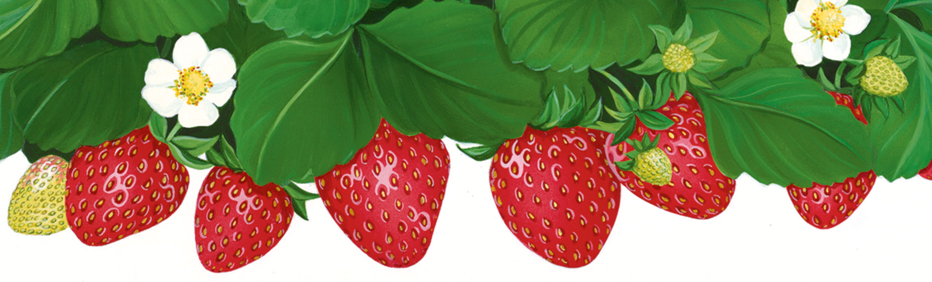 Strawberriescroppedweb
