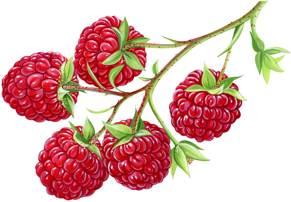 raspberrieswebres_new